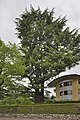 Zeder Villa Kinsky Brixen Tafel.jpg