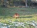 Zoo2007 img 5897.jpg