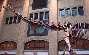 Titanosaur - Futalognkosaurus dukei