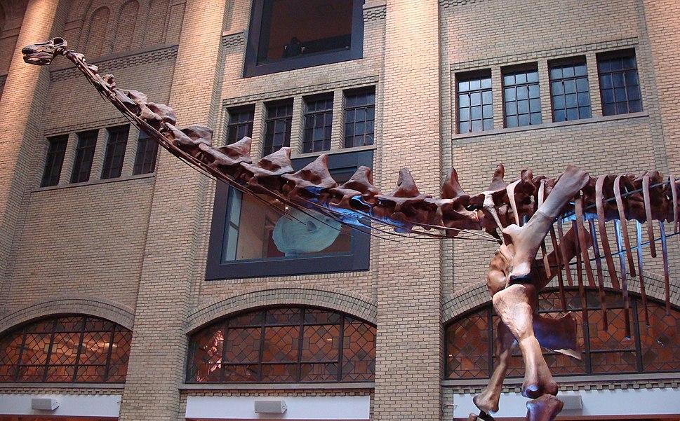 'Futalognkosaurus