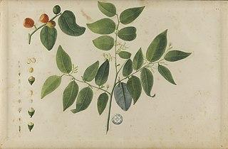 (Folhas, flores e frutos