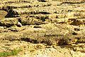 ® M.D. EL CAMPELLO ILLETA dels BANYETS CANTERA - panoramio (8).jpg