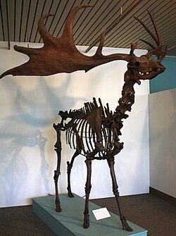 Überseemuseum Bremen 2009 250.JPG