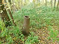 Šuplje stablo poljskog jasena (Fraxinus angustifolia) Hollow tree.jpg