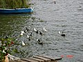 Λίμνη Ορεστιάδα - Λίμνη της Καστοριάς - Lake Orestiada - Lake Kastoria 03.jpg