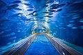 Аквариум, Океанографический парк Валенсии.jpg