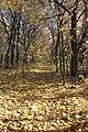 Байловский парк - 5.jpg