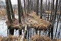Дорога через болото - panoramio (1).jpg