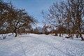 Зимові алеї.jpg