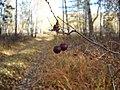 Золотая осень на Южном Урале (1) - panoramio.jpg