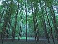 Измайловский парк - panoramio (13).jpg