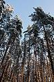 Луга, лес, 2011. - panoramio.jpg