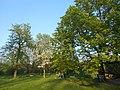 Одеса, Ботанічний сад, Французький бульвар 04-2018 05.jpg