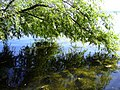 Озеро Шарташ Самолюбование - panoramio.jpg