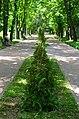 Парк Берёзовая роща в Киеве. Фото 7.jpg