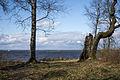 Парк Дубки, Финский залив.jpg