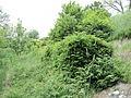 Парк шума Гази Баба во мај (123).JPG
