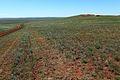 Проселок в степи - panoramio.jpg