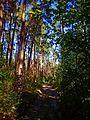 Просіка у лісі - panoramio.jpg