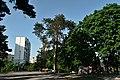 Сосна Нестерова CSC 0664.jpg