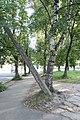 Столб упал - panoramio.jpg