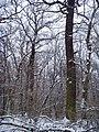 Чернечий Ліс 99.jpg