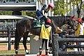 京都競馬場のホースリンクで乗馬を行っているマイネルデスポット(2015年10月25日).JPG
