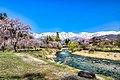 大出公園の桜01.jpg