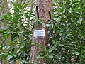 -2019-01-17 Sign on a tree, The Warren, Southrepps, Norfolk.JPG