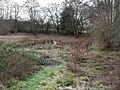 -2021-01-26 Crostwight Common wetland scub, Honing, Norfolk.jpg