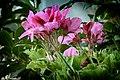 014237 - Flores - Flickr - M.Peinado.jpg