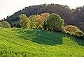 01 0010 Hemsberg von Bensheim-Zell.jpg