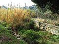 035 La riera d'Alella, aigües avall de la urbanització Alella Park.jpg