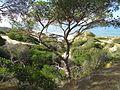 09-05-2017 Cliff tops, Praia da Balbina.JPG