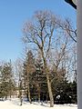 160313 Park of Manor in Kuznocin - 03.jpg