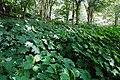 170811 Rokko Alpine Botanical Garden Kobe Japan08n.jpg