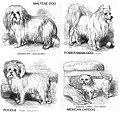 1853-dogs 05.jpg