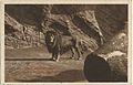 19071215 hamburg hagenbeck's tierpark raubtierschlucht.jpg