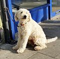 1 dog - 20150310 - 2.jpg