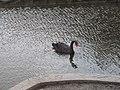 2005. Птицы Донецка (S40)03.jpg