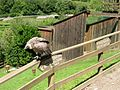 2008 07 15 Bird Care Centre of Castel Tyrol 61290 D9936.jpg