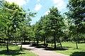 2010 07 21130 6752 Da'an District, Taipei, Daan Park, Taiwan.JPG