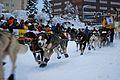 2010 Yukon Quest (4340855269).jpg