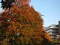 2011-10-31-155314 .JPG - panoramio.jpg