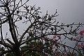 2012-10-22 15-42-03 Pentax JH (49278282372).jpg