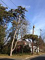 2014-12-30 13 31 47 Austrian Pine, utility pole and street light on Brenwal Avenue in Ewing, New Jersey.JPG