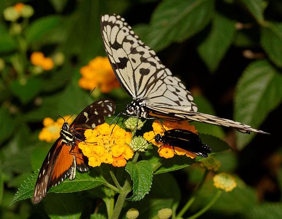 2015-10-24 13-08-30 papillon-hunawihr.jpg