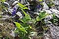 2015.05.30 14.12.11 IMG 2558 - Flickr - andrey zharkikh.jpg