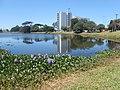 2016-01-17 - Parque da Lagoa - Desvio Rizzo - Caxias do Sul, Rio Grande do Sul, Brasil.jpg