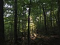 2016-09-04 07 31 03 View east through the forest from the Van Hoevenberg Trail about 1.2 miles south of the trailhead in North Elba, Essex County, New York.jpg